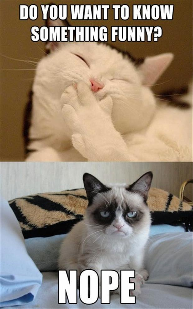 grumpy-cat-funny-jokes