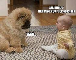 DOG_AND_BABY