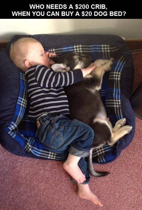 baby-dog-bed-crib1