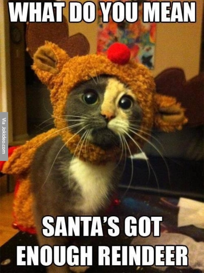 dirty-funny-christmas-jokes-cute-christmas-cat-meme-picture