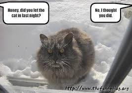 frozencat